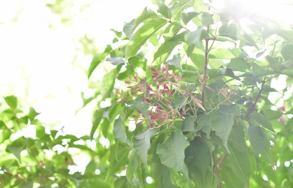 5月の庭(薔薇以外) 2021_d0025294_19231885.jpg