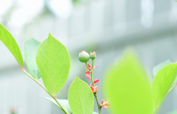 5月の庭(薔薇以外) 2021_d0025294_20305728.jpg