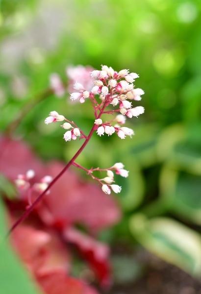 5月の庭(薔薇以外) 2021_d0025294_21165799.jpg