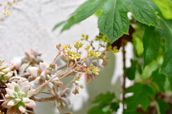 5月の庭(薔薇以外) 2021_d0025294_21171216.jpg