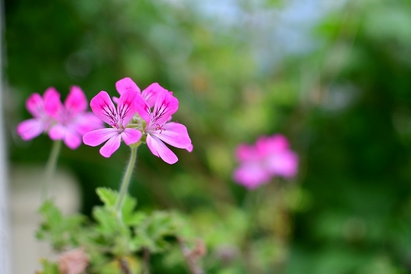 5月の庭(薔薇以外) 2021_d0025294_21181513.jpg
