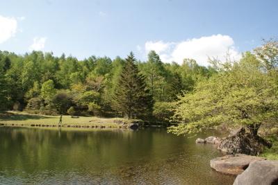 八ヶ岳2021(2) 自然郷うろうろ_c0221299_10500283.jpg
