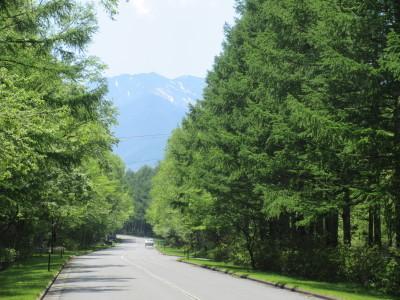 八ヶ岳2021(2) 自然郷うろうろ_c0221299_11075881.jpg