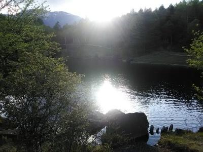 八ヶ岳2021(2) 自然郷うろうろ_c0221299_11111330.jpg