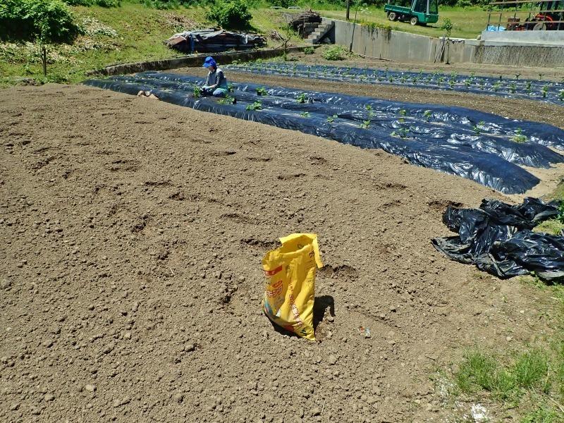 兼業農家は追加で苗ものを植えました_c0336902_14230834.jpg