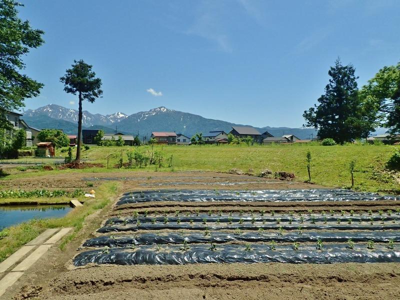 兼業農家は追加で苗ものを植えました_c0336902_14231232.jpg
