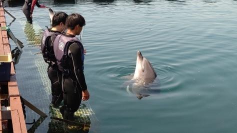 イルカについてのお話…💭_d0163407_15572007.jpg