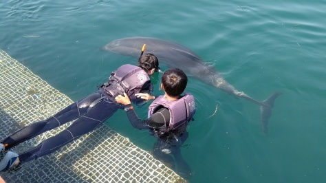 イルカについてのお話…💭_d0163407_16182721.jpg