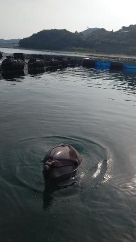 イルカについてのお話…💭_d0163407_16281702.jpg