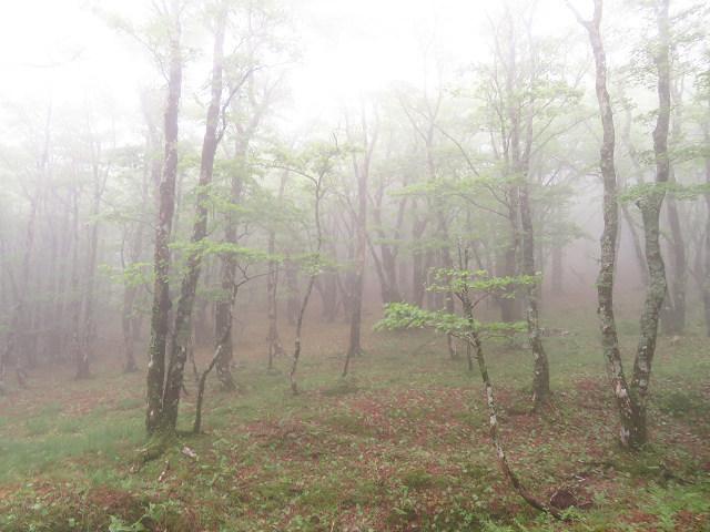 サラサドウダン祭り~お山は花盛~♪ 【奈良県】6/5_d0387443_19322613.jpg