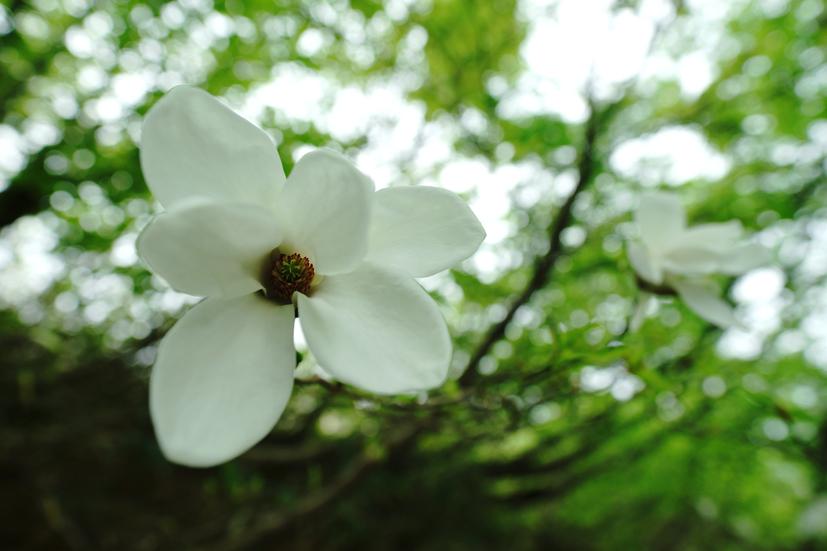 お花見山歩 朳差岳_f0016656_22490642.jpg