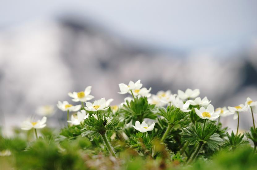 お花見山歩 朳差岳_f0016656_22501342.jpg