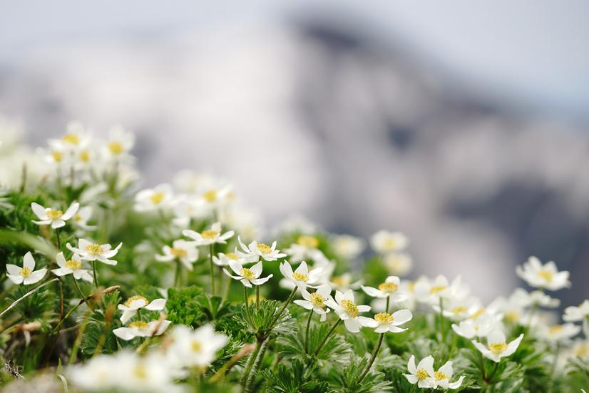 お花見山歩 朳差岳_f0016656_22502215.jpg