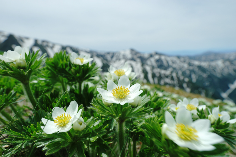 お花見山歩 朳差岳_f0016656_22504908.jpg