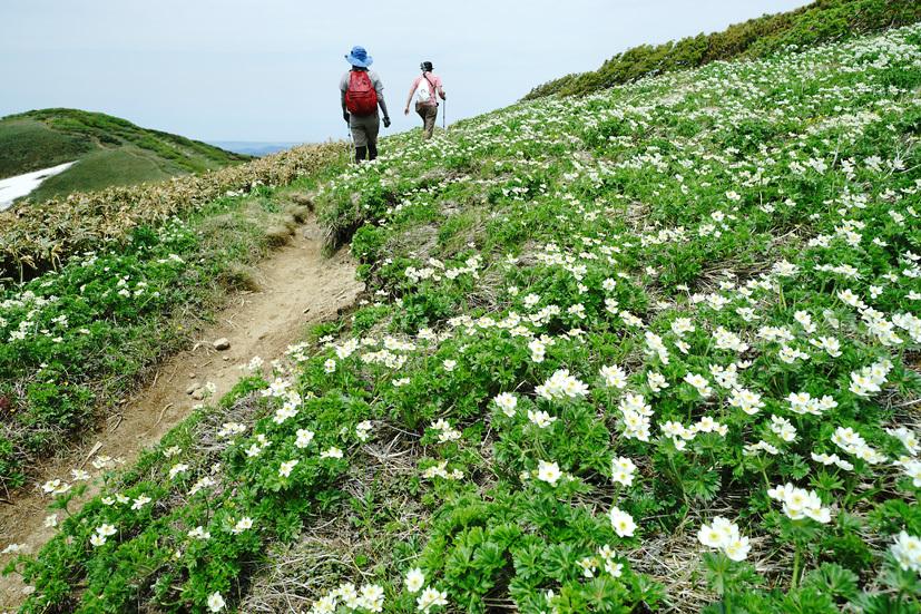 お花見山歩 朳差岳_f0016656_22511408.jpg