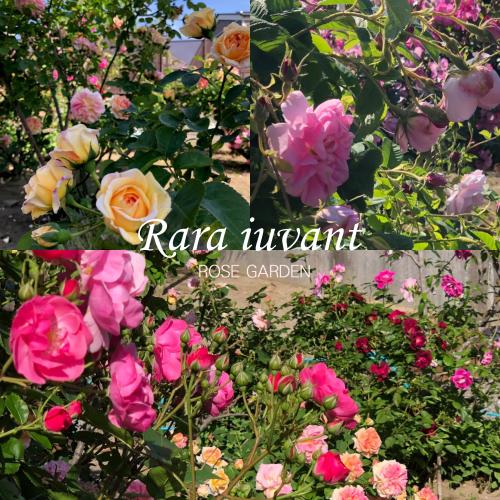 バラのお庭_b0345658_21453591.jpg