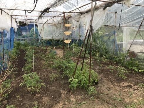 ジャガイモ収穫_b0091783_06503834.jpeg