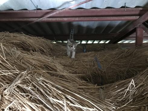 ジャガイモ収穫_b0091783_06581618.jpeg