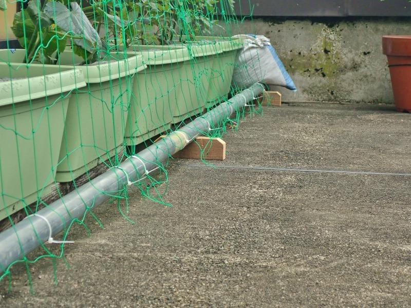 日曜日、会館の「屋上菜園」にネットを掛けました_c0336902_21390162.jpg