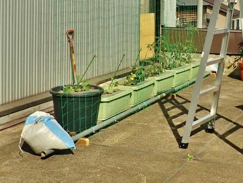 日曜日、会館の「屋上菜園」にネットを掛けました_c0336902_21390573.jpg