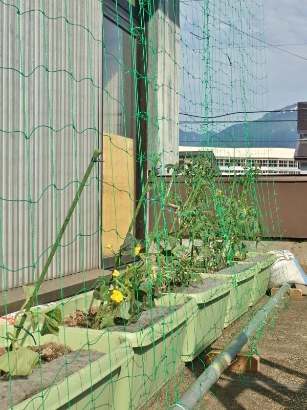 日曜日、会館の「屋上菜園」にネットを掛けました_c0336902_21390908.jpg