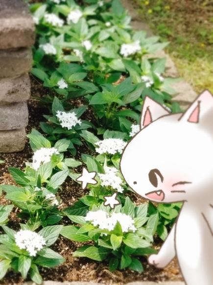 Twitter写真絵日記まとめ⑩_a0201203_16022757.jpg