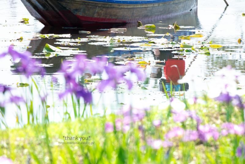 Waterfront_c0211922_05504662.jpg