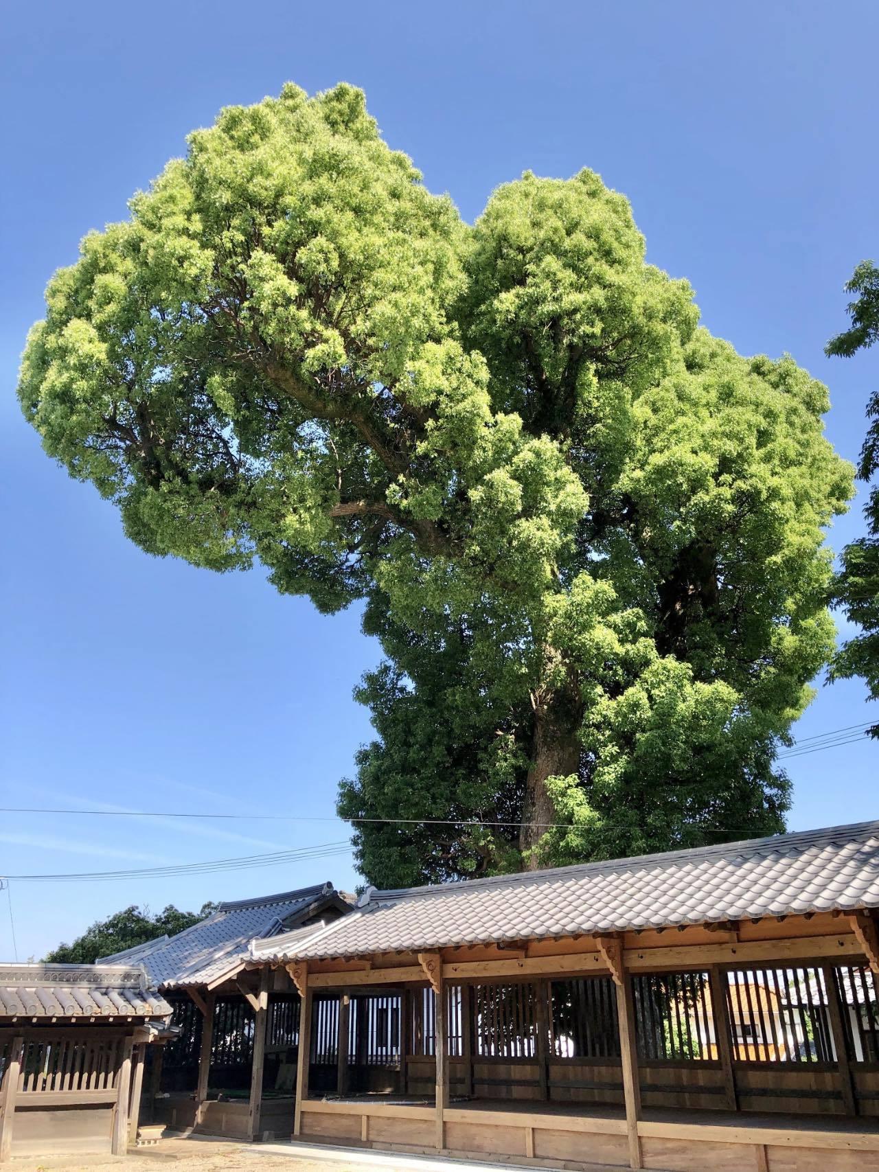 福島八幡宮3 福岡県八女市本町 2021.05.23_b0023047_02115397.jpg