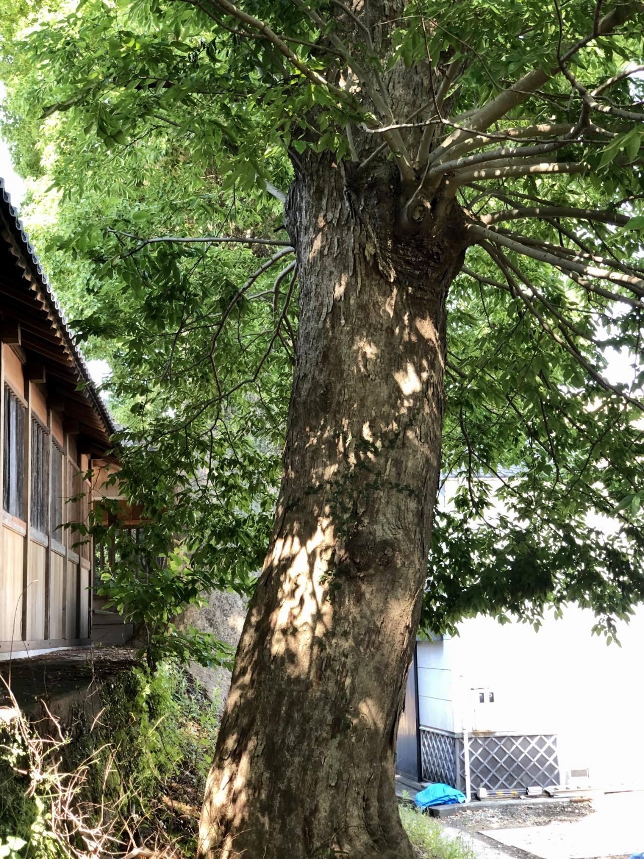 福島八幡宮3 福岡県八女市本町 2021.05.23_b0023047_02121990.jpg