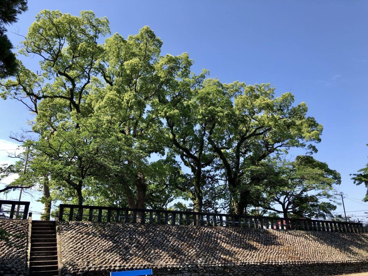 福島八幡宮3 福岡県八女市本町 2021.05.23_b0023047_02123309.jpg