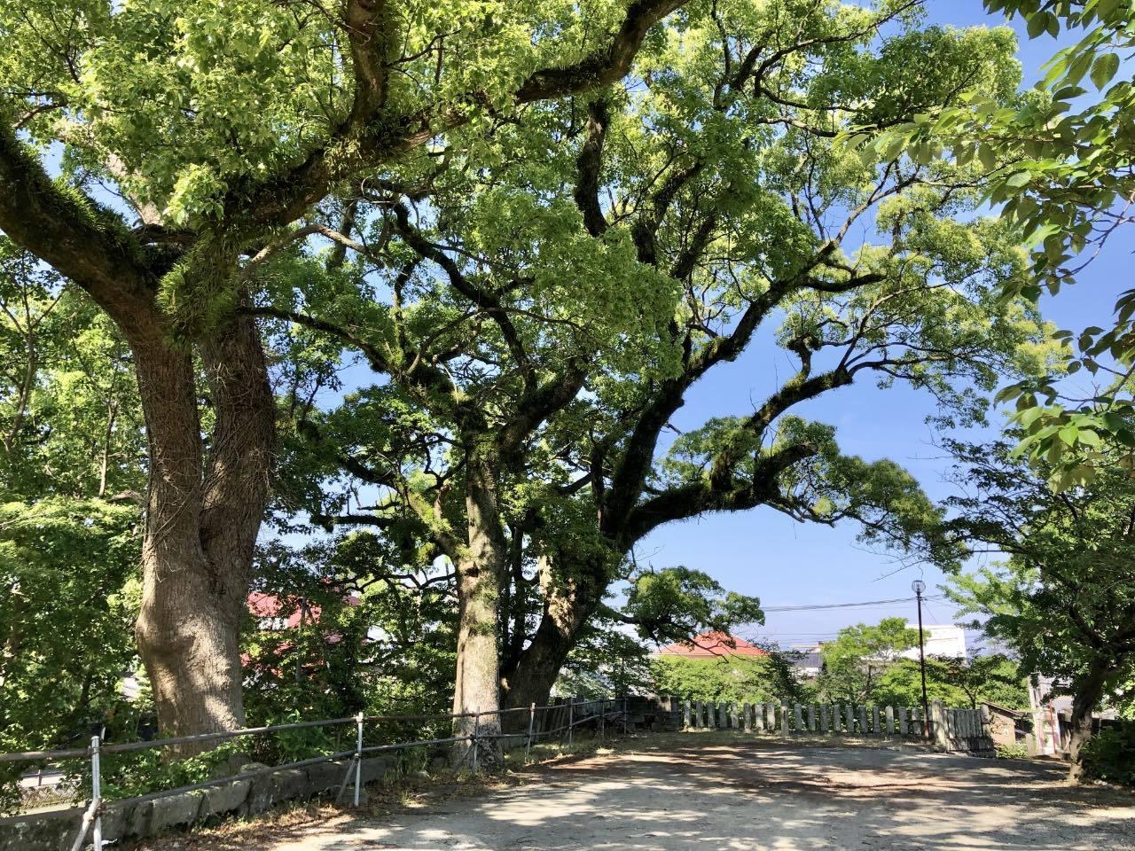 福島八幡宮3 福岡県八女市本町 2021.05.23_b0023047_02125692.jpg