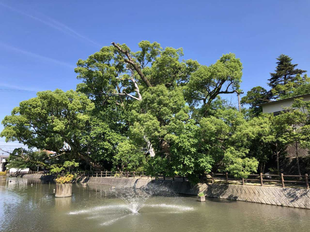 福島八幡宮3 福岡県八女市本町 2021.05.23_b0023047_02140635.jpg