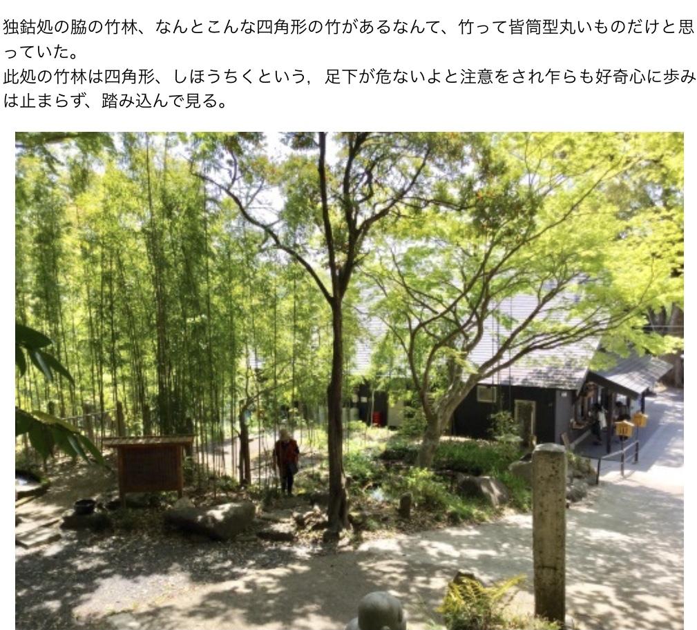 亀甲竹・布袋竹ーーー竹の種類600種もあると知った_a0053063_18570370.jpeg