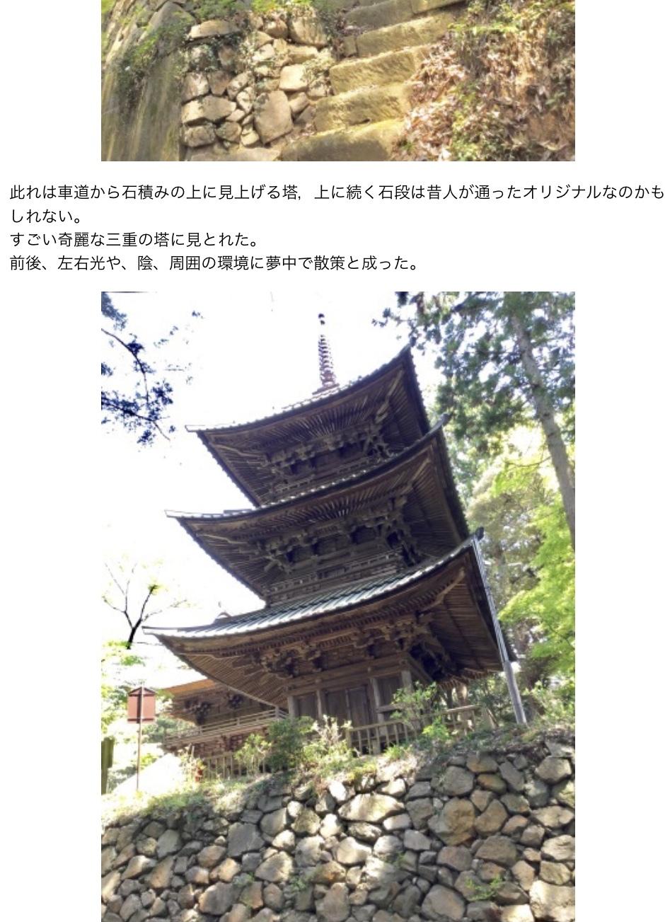 亀甲竹・布袋竹ーーー竹の種類600種もあると知った_a0053063_18584654.jpeg