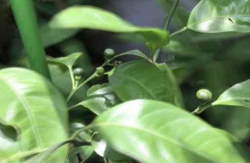 カマキリが茶色からグリーンにトカゲの日向ぼっこ_a0053063_19453282.jpeg