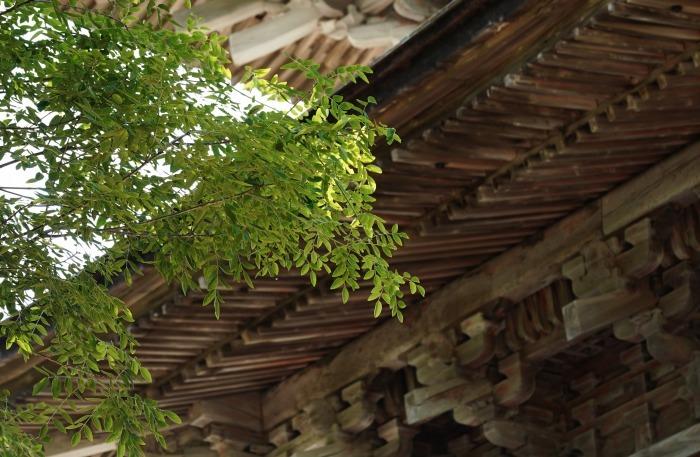 重要文化財10棟、加賀百万石の名刹「妙成寺」(羽咋市)_b0173867_22374325.jpg