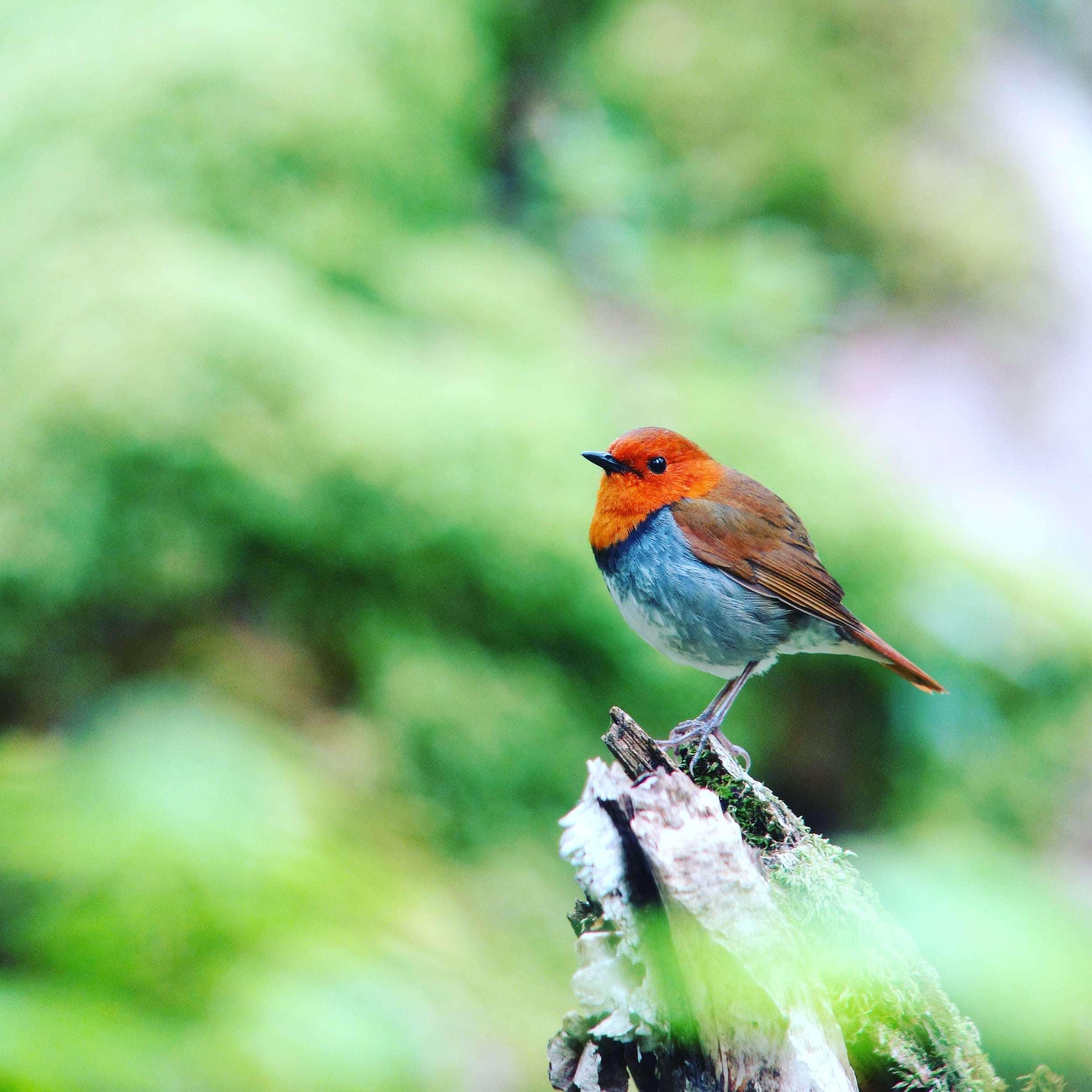 今年も赤の季節到来_a0143780_13283505.jpg
