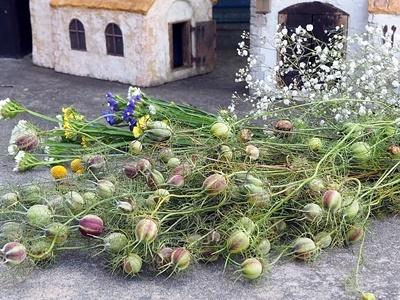 本日の収穫~!_f0129726_18171508.jpg
