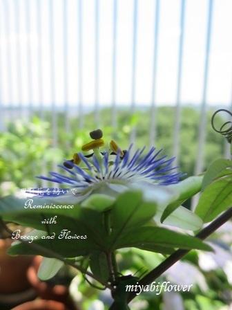 種蒔きとうれしいこと 悲しいこと 小さなベランダで・・・_b0255144_01180521.jpg