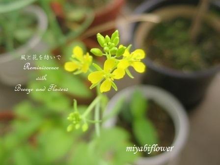 種蒔きとうれしいこと 悲しいこと 小さなベランダで・・・_b0255144_01293088.jpg