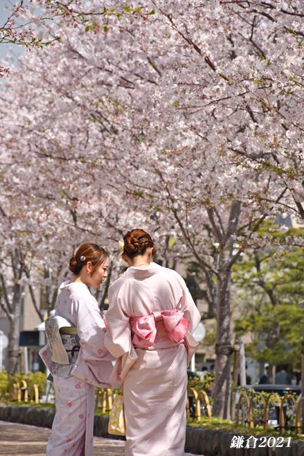 段葛の桜 満開 ② 『そうだ 鎌倉、行こう 2021』_d0251161_09393383.jpg