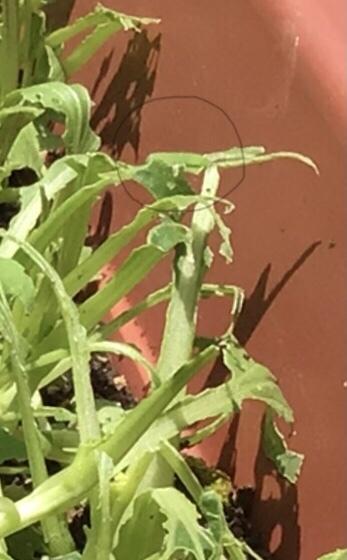 カマキリが茶色からグリーンにトカゲの日向ぼっこ_a0053063_14431636.jpeg