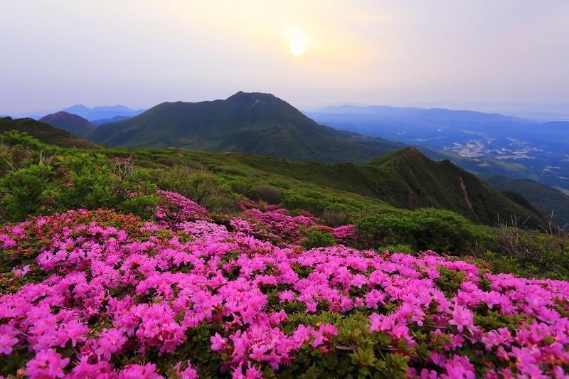 九重山 ミヤマキリシマ_e0405576_21410082.jpg