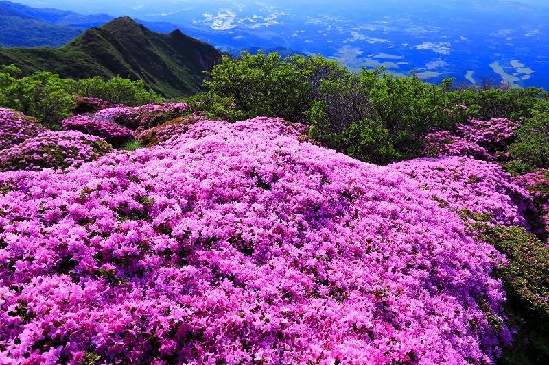 九重山 ミヤマキリシマ_e0405576_21411732.jpg