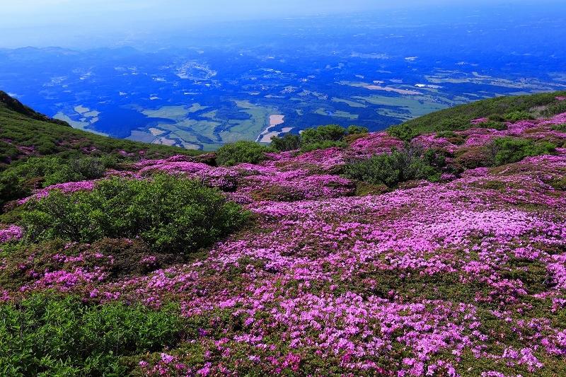 九重山 ミヤマキリシマ_e0405576_21412314.jpg