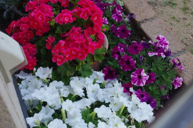 6月10日自宅の庭の花々_d0034980_20381492.jpg