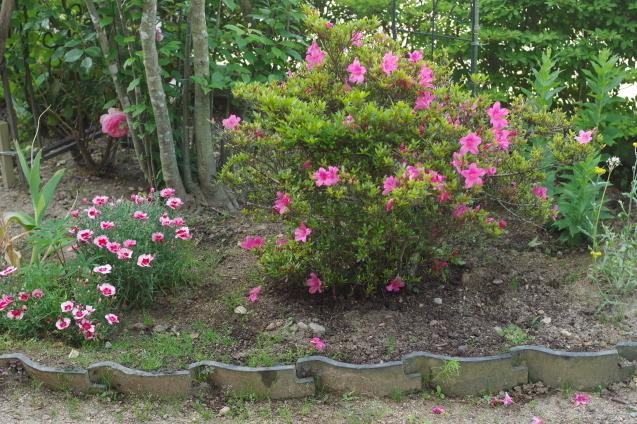 6月10日自宅の庭の花々_d0034980_20425782.jpg