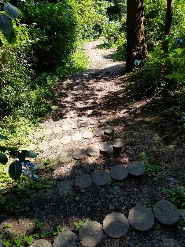 紫陽花の粟井神社へ行..._d0363587_16230164.jpg
