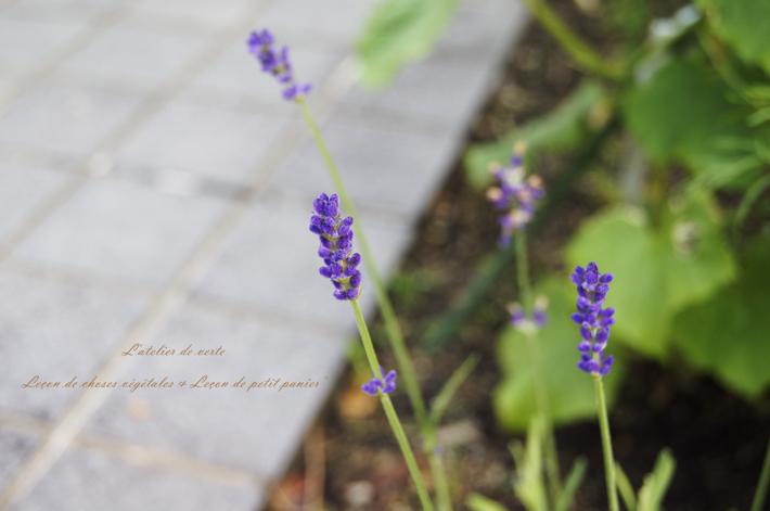 六月の庭。_b0365901_20160027.jpg