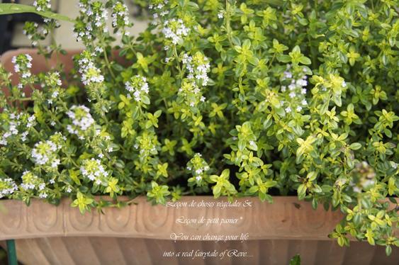 六月の庭。_b0365901_20170237.jpg